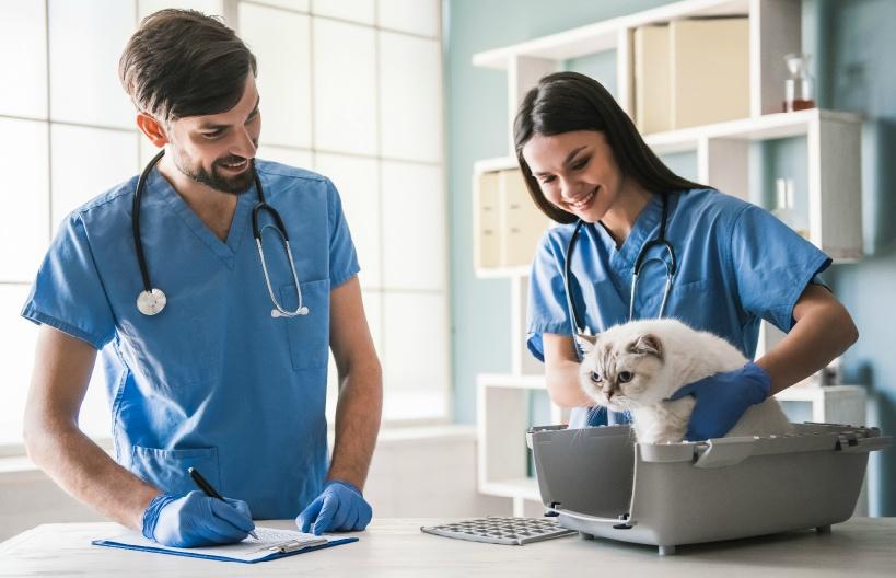 公務員の獣医を辞めたい場合に考えることは?