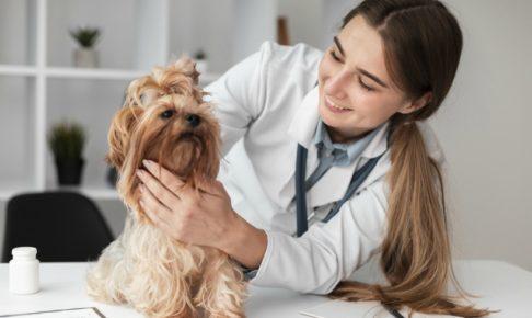 地方公務員の獣医は嫌われる職業!辞めたい場合に考えるべきこと