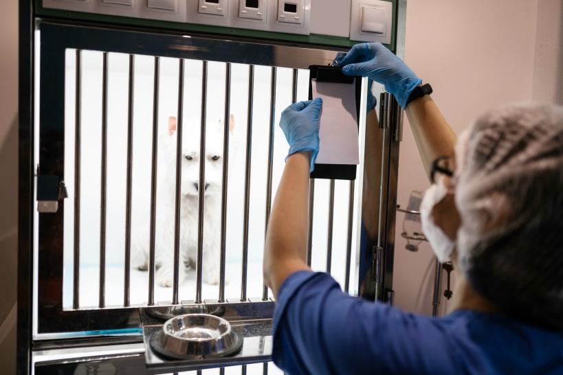 獣医師が辞めたい場合、別の動物病院に転職するケースが多い